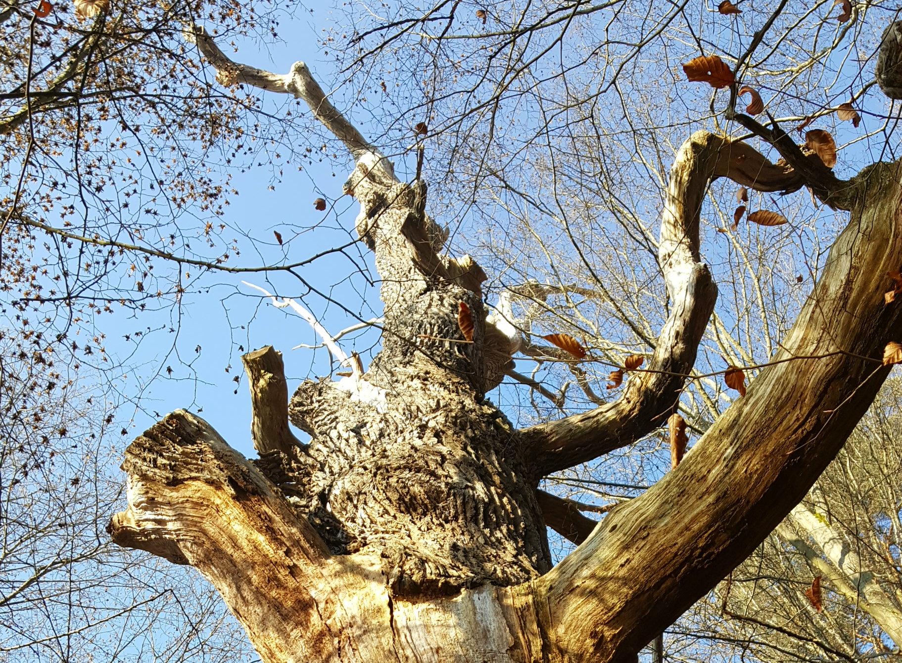 verdorrter Baum - Ausschnitt